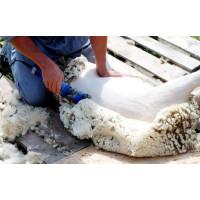 Стрижка овец. Когда и как стричь овец